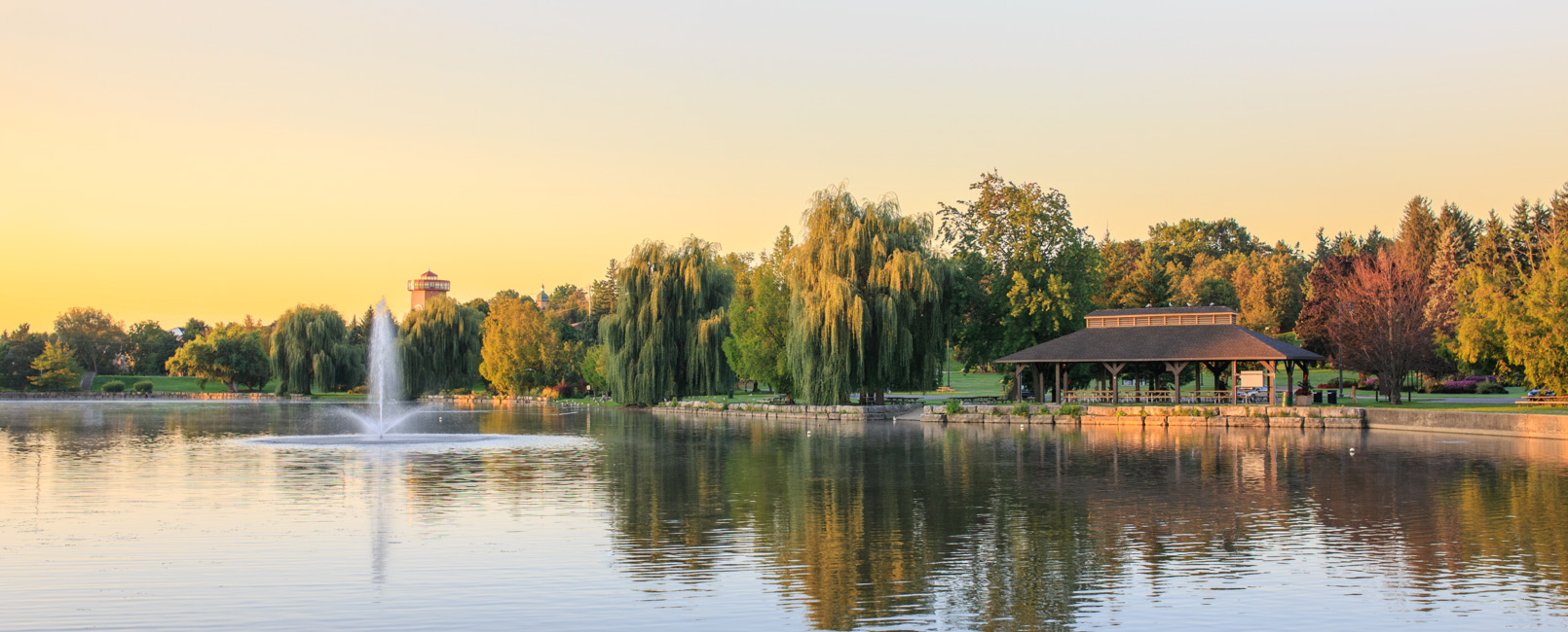 River bank with willow trees